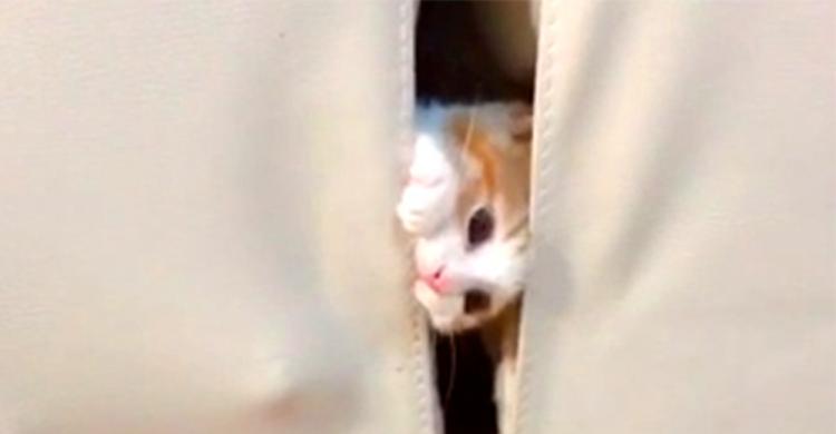 【にゃん法隠れ身の術!】お姉ちゃんニャンコから隠れる子猫。華奢な体で見事に姿を消しちゃった!?