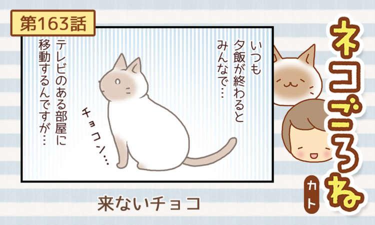 【まんが】第163話:【来ないチョコ】まんが描き下ろし連載♪ ネコごろね(著者:カト)