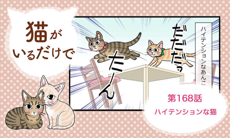 【まんが】第168話:【ハイテンションな猫】まんが描き下ろし連載♪ 猫がいるだけで(著者:暁龍)