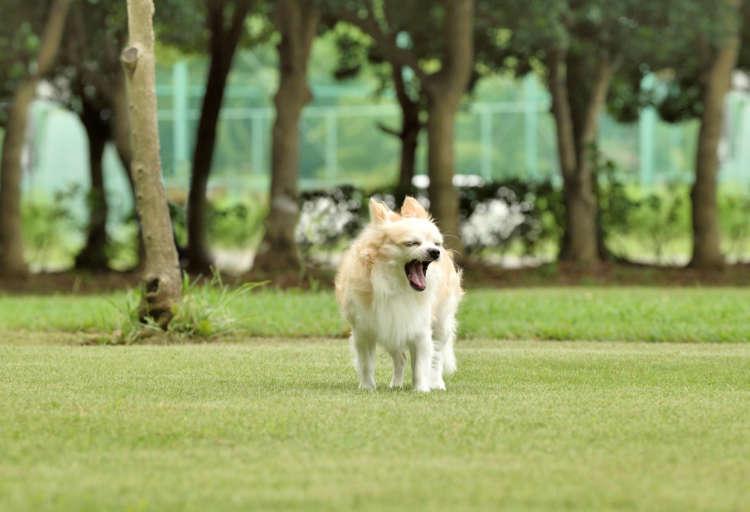 近所の広い公園でのんびり。やっぱり散歩は最高だよね