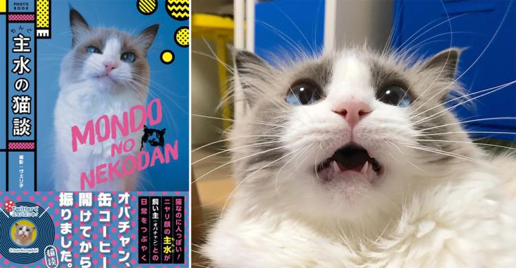 変顔もニヤリ顔も全部見せちゃう百面相の美人ネコ。人間みたいな「主水ちゃん」を徹底解説!!