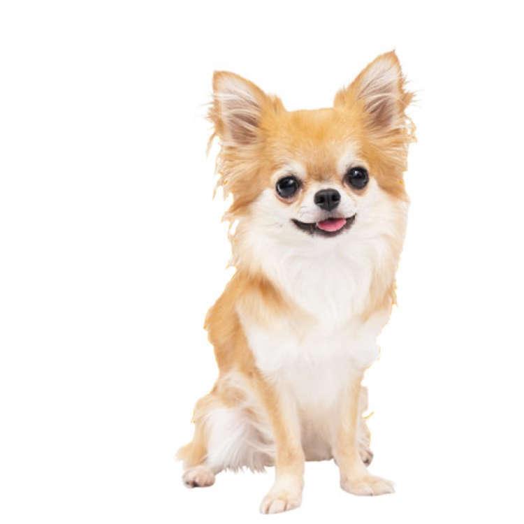 チワワは怖がりだと聞いていたので、犬の幼稚園に行きました
