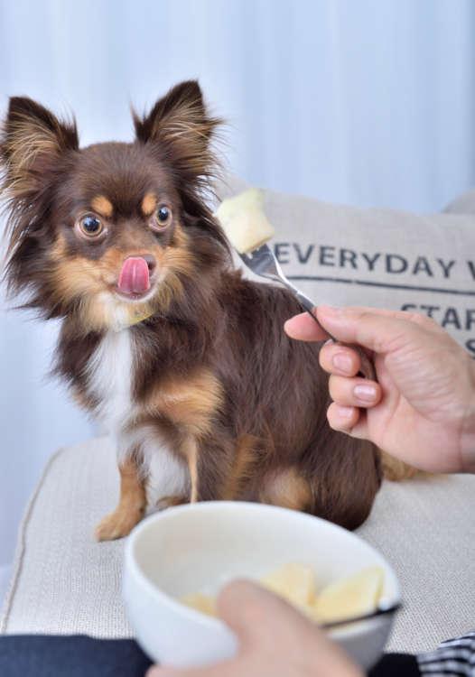 果物って、やっぱうまいよ 犬の「おっとっと」も好き