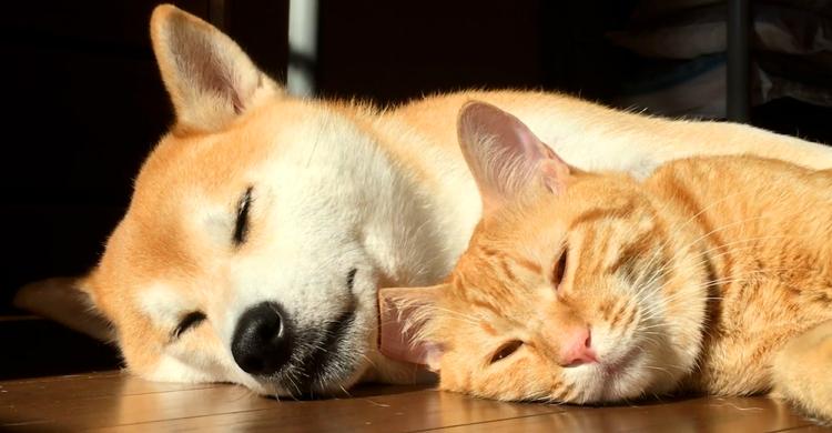 【近距離ひなたぼっこ♡】 種も違うのに寝顔がそっくり兄弟。イチャイチャ姿がいじらしい(*´艸`)