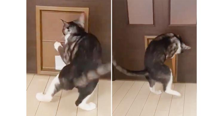 押せばすんなり通れるネコ用扉を必死で引こうとするニャンコ。必死な姿が最強に愛くるしい♡