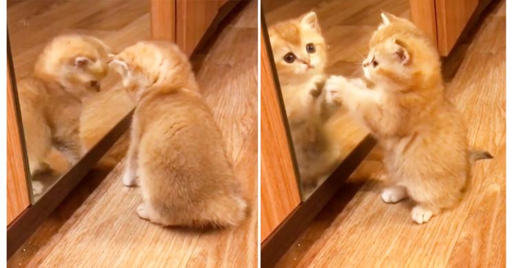 【鏡の中の子猫をレスキュー!?】同じ動きをする友だちを助け出そうと大奮闘♡