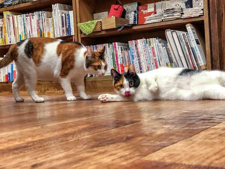 書店発の保護猫活動
