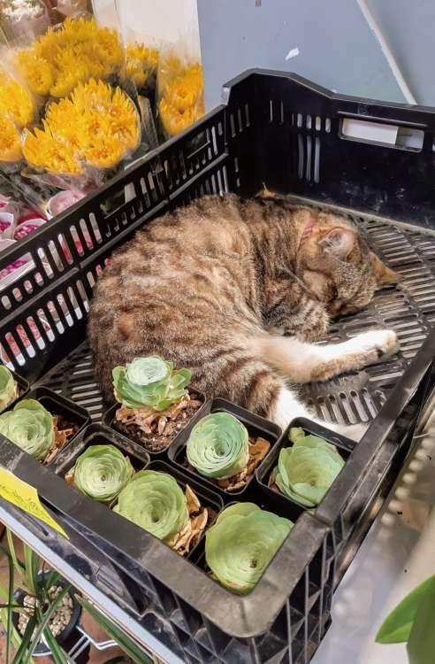 猫は自分にちょうどいい大きさをよく知っている
