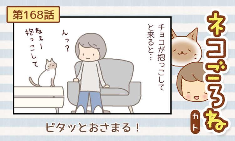 【まんが】第168話:【ピタッとおさまる!】まんが描き下ろし連載♪ ネコごろね(著者:カト)