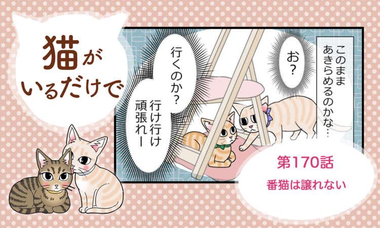 【まんが】第170話:【番猫は譲れない】まんが描き下ろし連載♪ 猫がいるだけで(著者:暁龍)