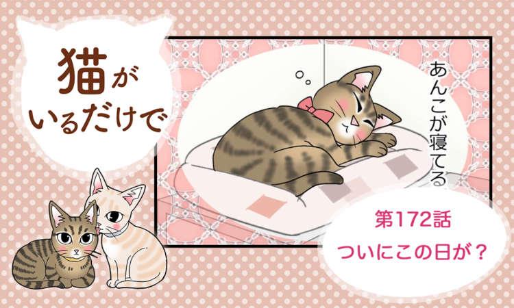 【まんが】第172話:【ついにこの日が?】まんが描き下ろし連載♪ 猫がいるだけで(著者:暁龍)