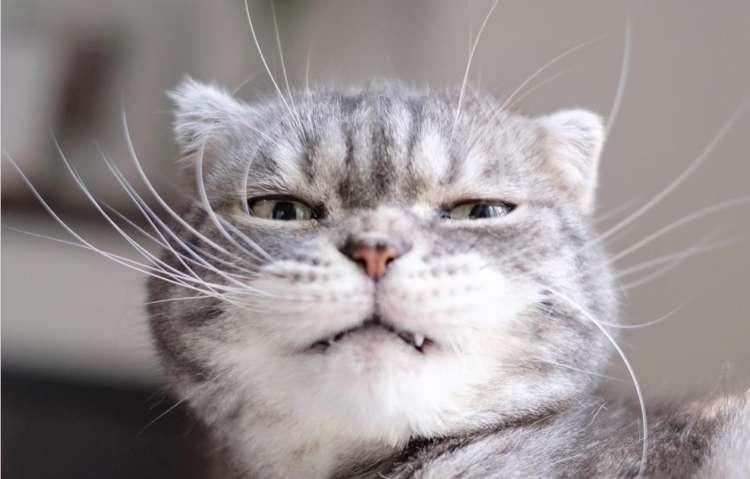 にくたらカワイイ♡ 表情が豊かすぎるニャンコが見せてくれた、変幻自在な変顔10選