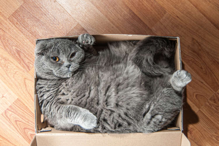 【獣医師監修】猫が箱好きなのはどうして? 箱に入りたがる理由とおすすめの箱