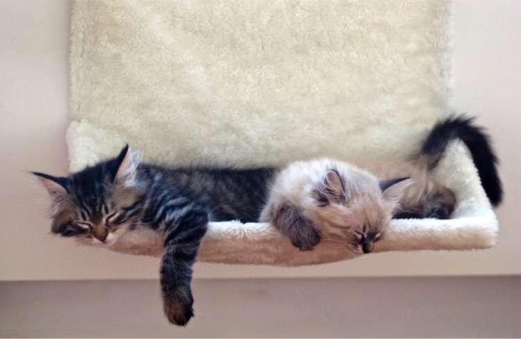 【子猫の育て方】~生後3ヶ月の子猫の育て方・ケア法をまとめました!