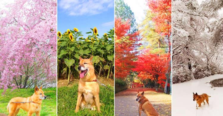 【君と春夏秋冬♪】元保護犬だったワンコを飼い主さんが外の世界へ。幸せそうな表情に心温まる…♡