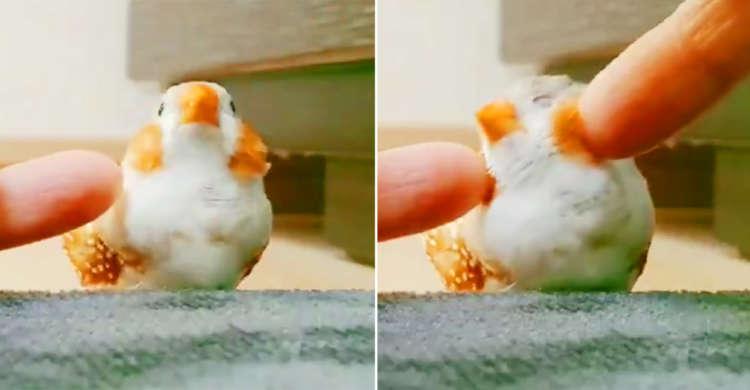 「小指でほっぺをくるくる♪ 」おとぎ話のような小鳥さんの可愛い仕草に悶絶寸前ッ!?