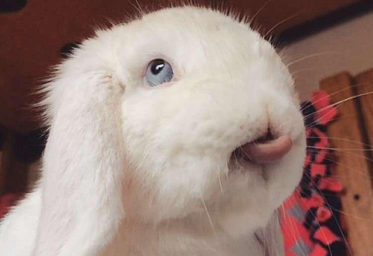 一度見たら忘れられないッ♡ 真っ白なウサギさんの、不思議な表情の数々が…Σ(゚Д゚) 11選