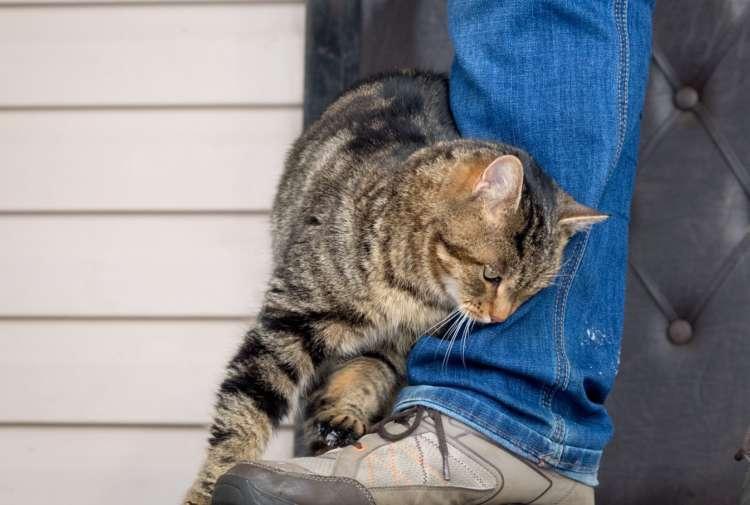 【獣医師監修】猫が頭を擦りつけるのはなぜ? しぐさでわかる猫の気持ち