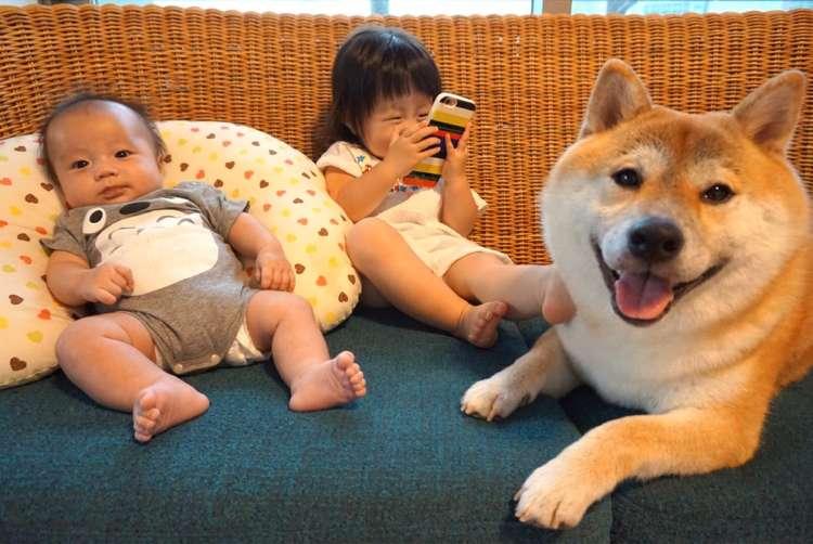 【なかよし三兄弟♡】子守が上手な柴犬お兄ちゃん! 子どもたちの傍に寄りそう姿に、ほっこり♡ 11枚