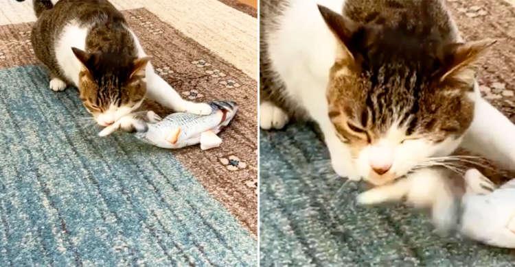 【往復ビンタは愛の鞭♡】 魚型のぬいぐるみを愛して止まないにゃんこ。果敢に抱きしめる姿にきゅんッ♪