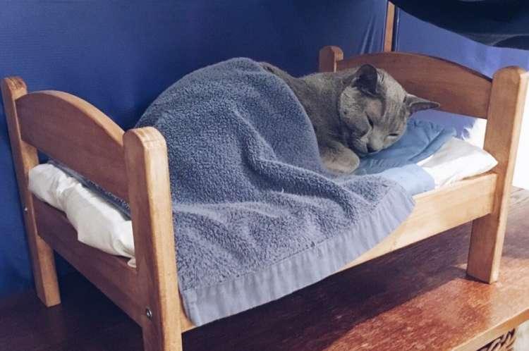【寝ごこち最高ニャ~♡】IKEAの人形用ベッドを使いこなす、かわいいニャンコが大集合!(12枚)
