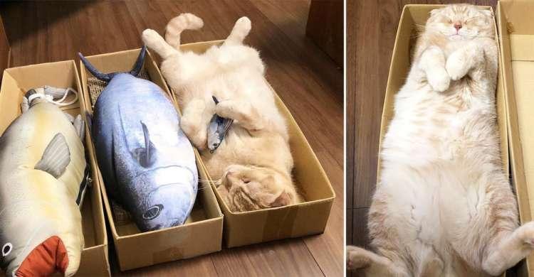 """まるで出荷前の魚みたい!? 大好きなダンボールの中で""""ネコの開き""""になっちゃうニャンコさん♪"""