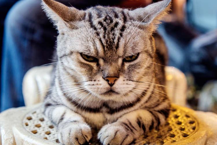 【獣医師監修】猫を怒らせる行動や状況とその回避策について