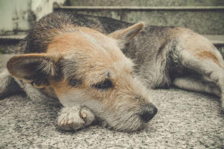 【獣医師監修】犬がため息をつくのはなぜ? ため息をつく犬の心理