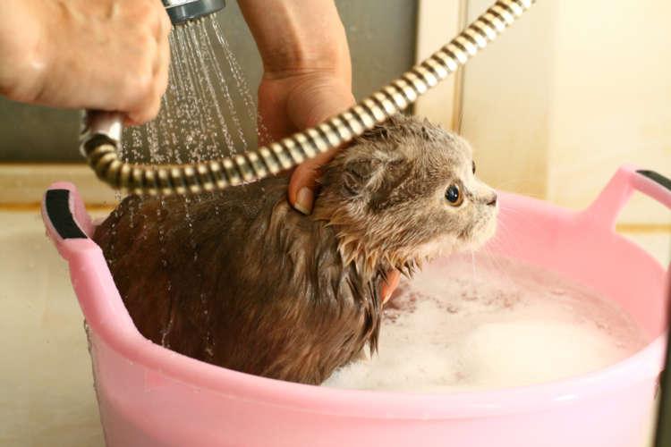愛猫にシャンプーを! 猫をお風呂好きにするにはどうしたらいいの?