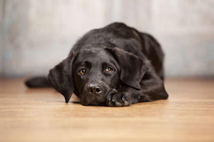【獣医師監修】犬が命令もしていないのに伏せをする意味とは?