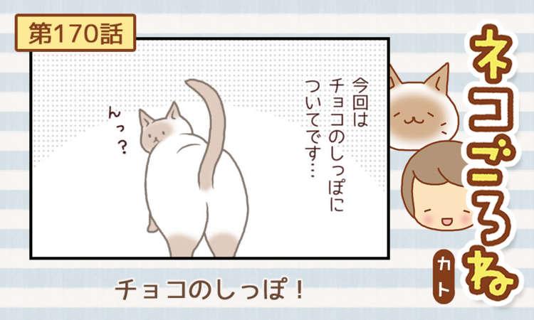 【まんが】第170話:【チョコのしっぽ!】まんが描き下ろし連載♪ ネコごろね(著者:カト)