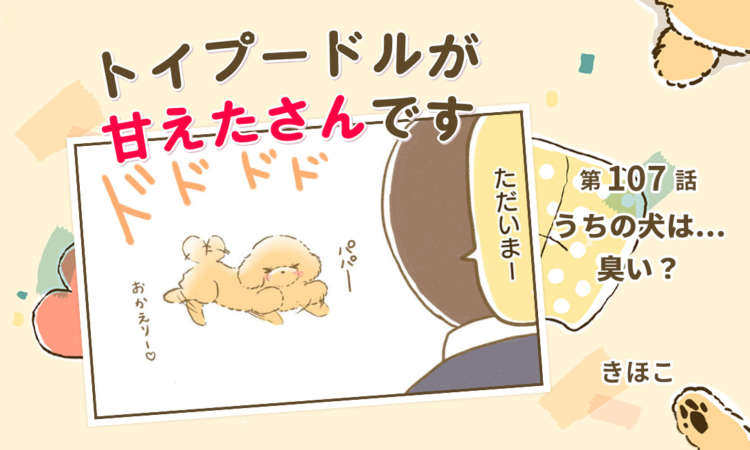 【まんが】第107話:【うちの犬は…臭い?】まんが描き下ろし連載♪ トイプードルが甘えたさんです