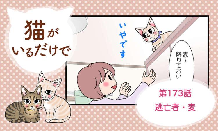 【まんが】第173話:【逃亡者・麦】まんが描き下ろし連載♪ 猫がいるだけで(著者:暁龍)