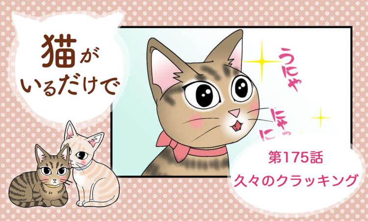 【まんが】第175話:【久々のクラッキング】まんが描き下ろし連載♪ 猫がいるだけで(著者:暁龍)