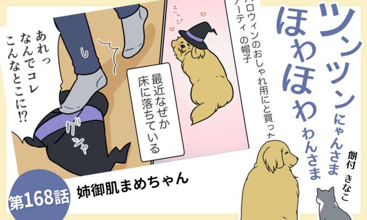 【まんが】第168話:【姉御肌まめちゃん】まんが描き下ろし連載♪ツンツンにゃんさま ほわほわわんさま