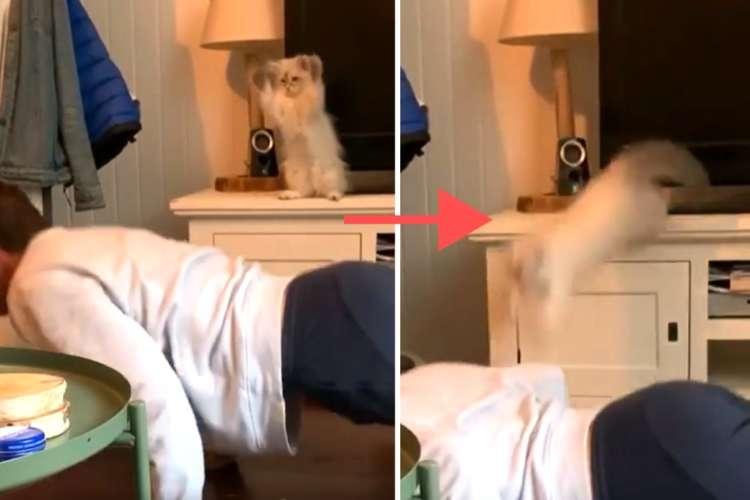 ドジっこ子猫の珍事件♪ 筋トレにおててをパタパタ参加中。すると突然、視界から子猫が消えた!?