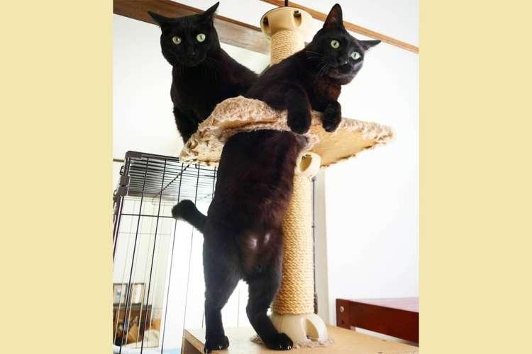【上半身が2匹の黒猫!?】まるで幽体離脱しているみたいな写真に思わず凝視ッ(; ・`д・´)!!