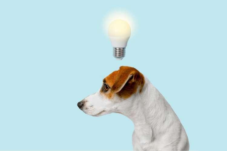 【獣医師監修】犬を留守番させる時は電気を点ける? それとも消しておく?