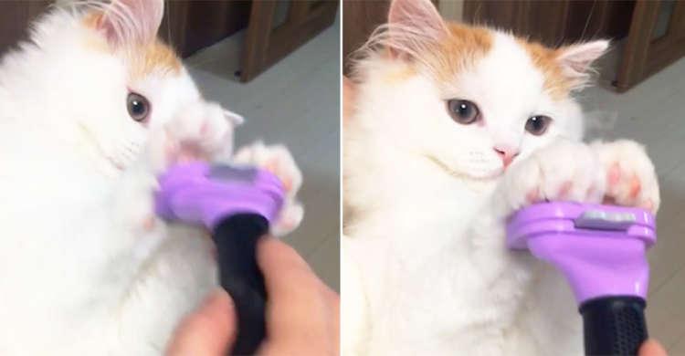 """""""むにゃ毛だけはご勘弁ッ!"""" ふさふさボディーを守るべく子猫が可愛すぎる防御を披露♪"""