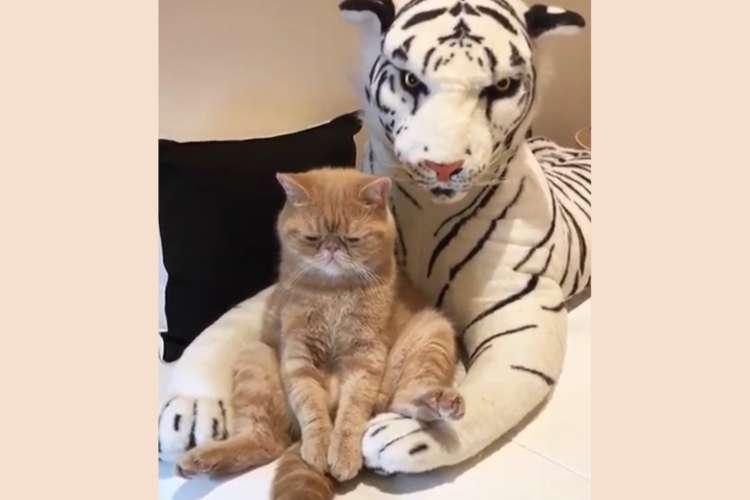 【切ないの? 眠いの?】虎さんに体をあずけ、味のある表情でくつろぐニャンコが可愛かった(>ω<)
