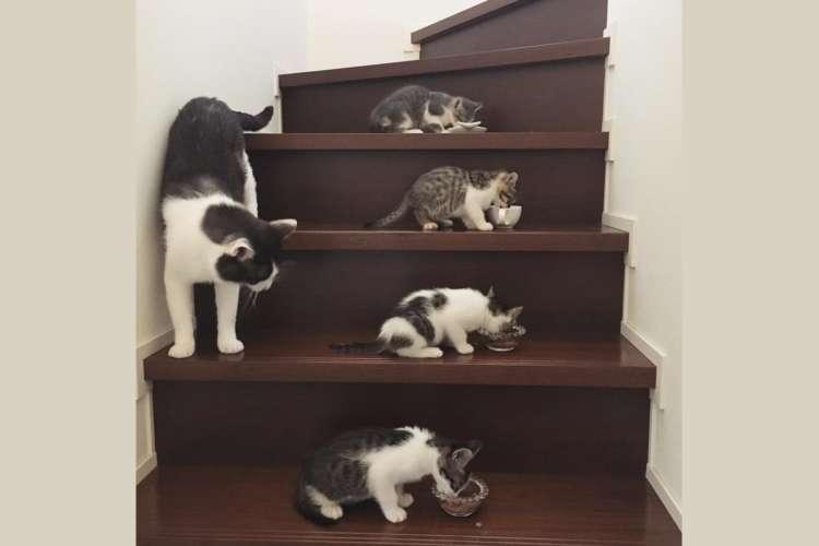 【今日から家族ニャ!】突然やってきた4匹の子ネコに、オスの先住ネコがとった対応が…優しかった♡
