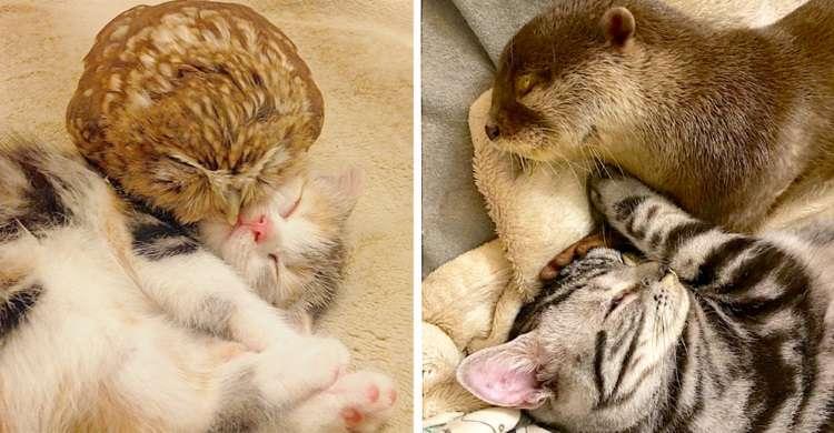 【猫カフェに来たつもりが…】猫にフクロウ、カワウソにカメ…種族を越えた猫カフェが凄かった♡