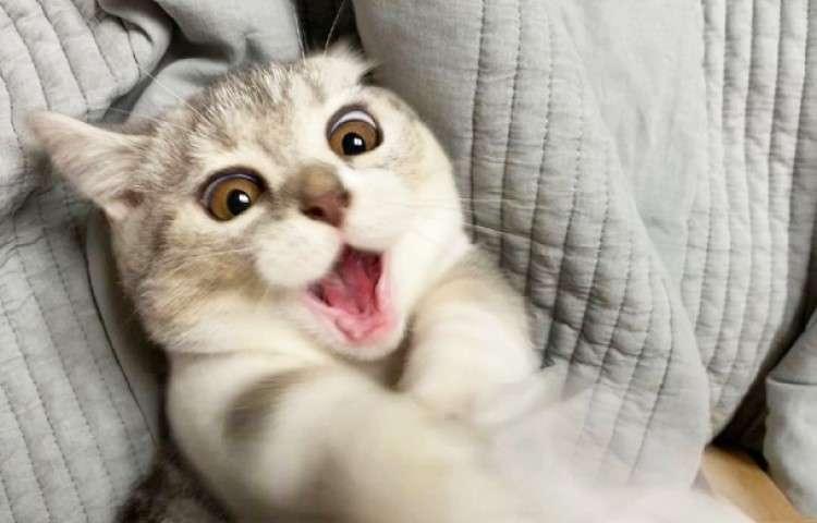 【ティッシュに取り憑かれたニャンコ!】 凄まじい勢いの猫パンチとファニーフェイスが可愛すぎた…♡