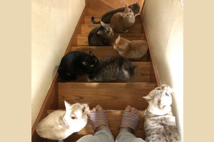 【完全に嫌がらせ】階段を下りようとすると、そこには「もふもふトラップ」の姿が…(;・`д・´)!2枚
