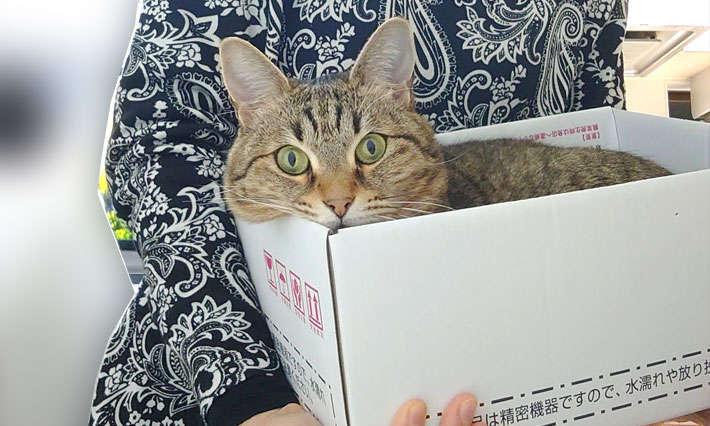可愛い猫いかがですか~