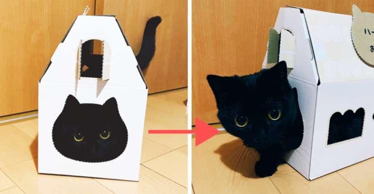 「まるで黒猫のイラスト」家型の箱から顔出す子猫♡ 自分専用のお家にワクワクが止まらない!
