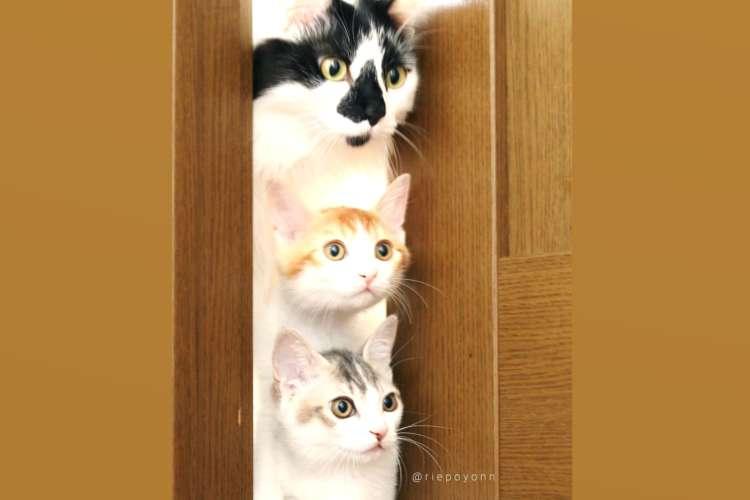 【ニャンコは見た!】ドアの隙間から覗く3つのお顔♡ かわいすぎる猫たちの様子に…きゅんっ(*´ω`)
