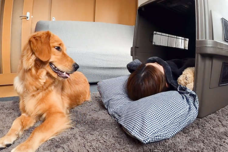 【もしもハウスにママが寝ていたら…】戸惑いながらも、寝床をままに貸してあげる優しいワンコ。