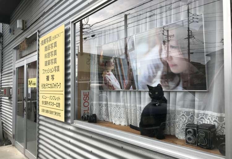 モデルから接客までこなす写真館の看板猫