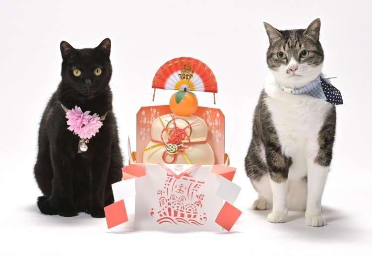 【猫びより】モデルから接客までこなす写真館の看板猫【豊橋】(辰巳出版)